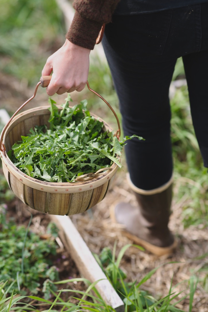 Our Favorite Resources for Learning About Foraging Wild Foods and Herbs: Blogs, Podcasts, and YouTube Channels on Gathering Wild Edibles and Medicinal Plants