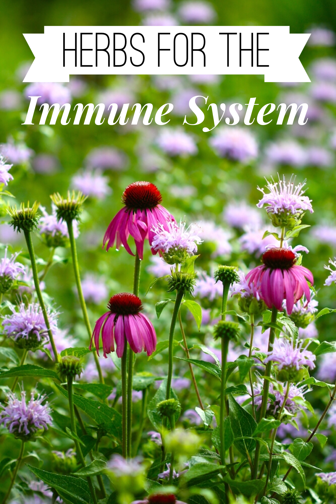 herbs-for-the-immune-system