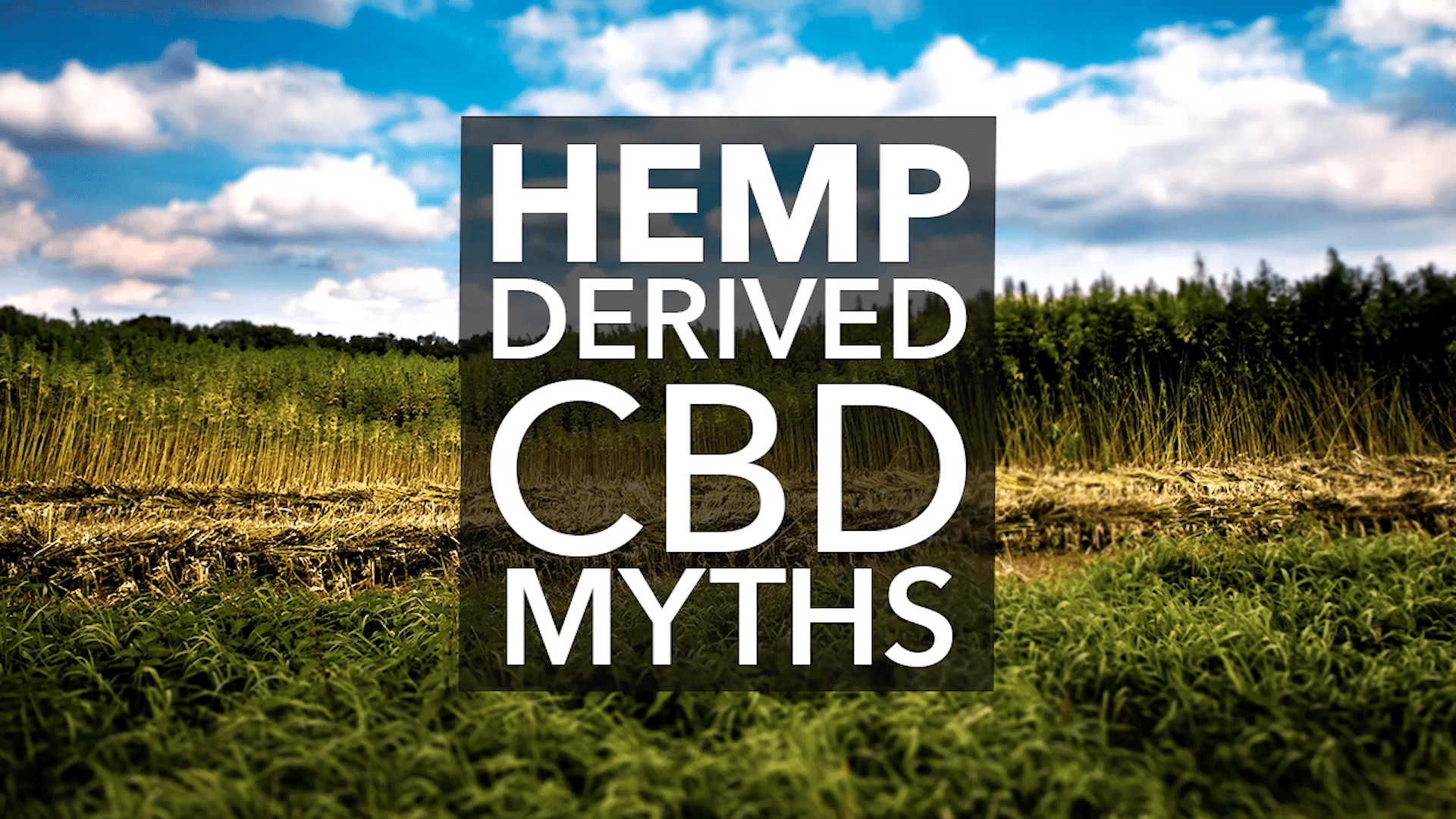 Despite its growing popularity, there are still myths and misconceptions around hemp-derived CBD oil. Our latest video takes a look at the truth behind 5 CBD myths.