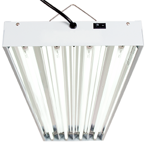 Best Grow Light for Seedlings