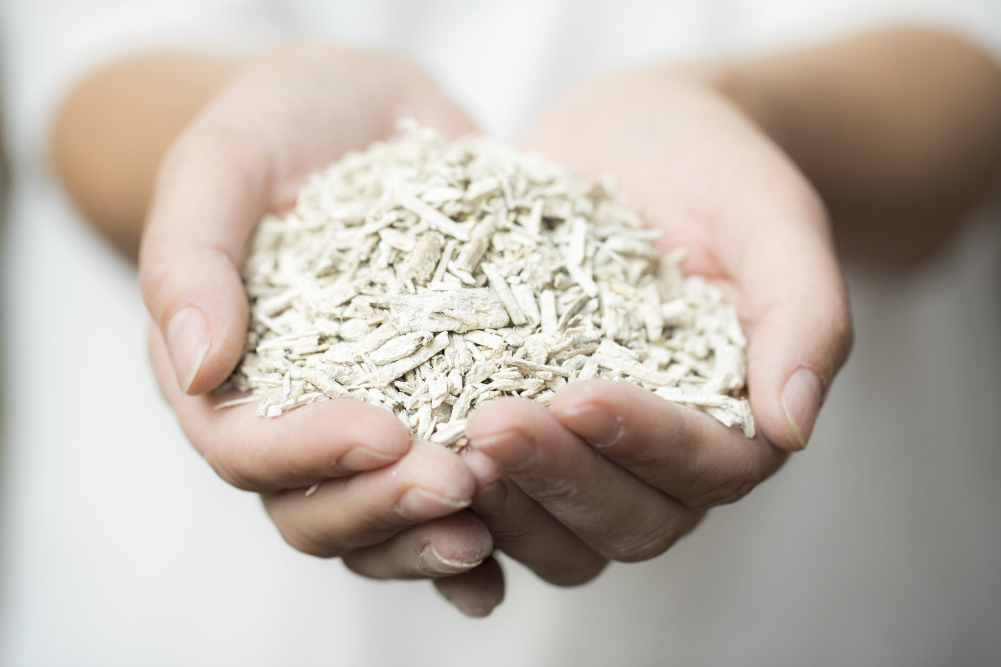 A handful of dried hemp cores, looking a lot like wood chips. Hempcrete building material is one common use for hemp hurds or shivs, the woody core of the plant. Someday, they could be used in hemp supercapacitors too.