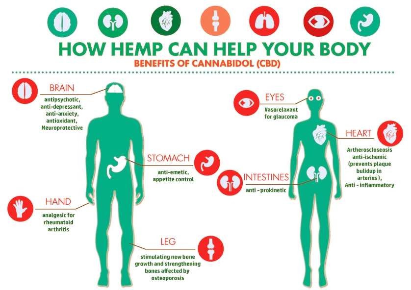 How does CBD work in the body - Learn Sativa University
