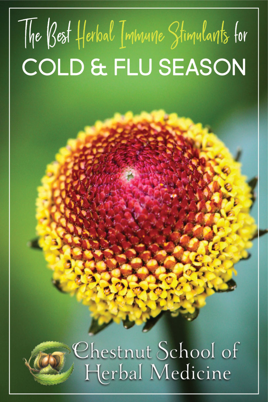 The Best Herbal Immune Stimulants for Cold and Flu Season