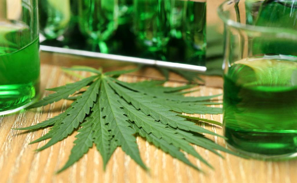 Most studies into CBD oil show few side effects, mostly minor ones like sleepiness or mild sedation. Photo: Hemp leaves near two beakers of green liquid, depicting hemp and CBD research.