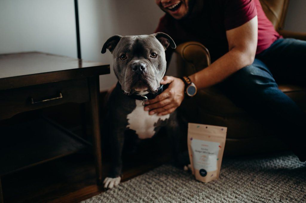 Populum Zen Pets Hemp CBD Chews are great for cats and dogs of all sizes. Photo: A bulldog poses excitedly with its owner and a pouch of Zen Pets Hemp CBD Chews.