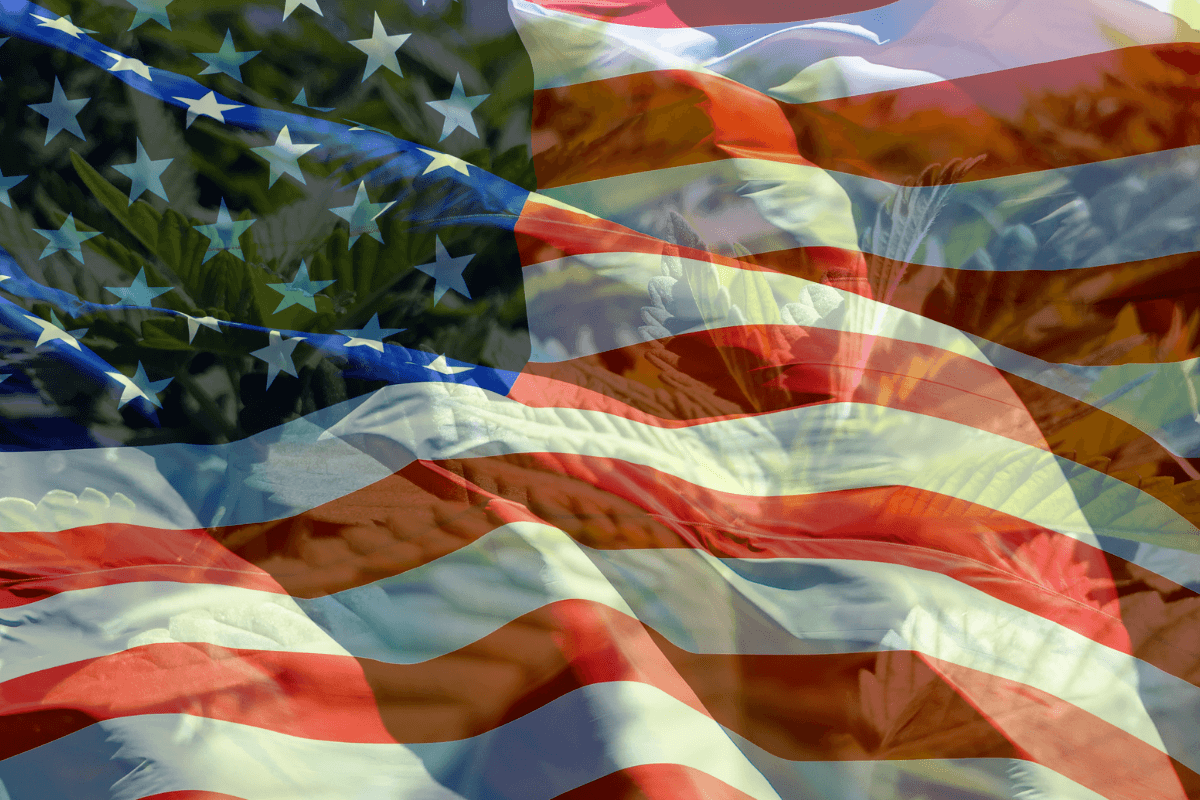 The 2020 election in the U.S. was a major step forward for hemp and cannabis. A photo of the U.S. flag, partly transparent so a photo of hemp plants can be seen underneath.